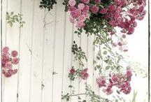 PIANTE E FIORI in casa e in giardino / Amore per la natura in piccoli gesti