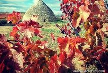 Rioja Tourism / by Jose R Camara Winetastelovers