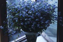 botanical / bo•tan•i•cal (adj.) of or relating to plants
