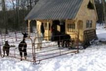 A Barn for Blaire