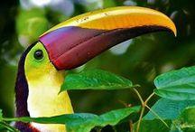 Costa Rica / Costa Rica ist ein Geheimtipp für Naturliebhaber, die eine abwechslungsreiche Reise durch eine faszinierende Landschaft suchen.  Dieses kleine traumhafte Land in Zentralamerika hat viel zu bieten und ist bekannt für seine einmalige Natur, traumhafte Strände und eine unglaublich vielfältige Tier- und Pflanzenwelt, die wir man in vielen verschiedenen Nationalparks und Naturschutzgebieten erforschen kann.