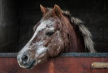 Furry Friends - Horses / by Nadine Hastings