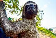 Tiere Mittel- und Südamerikas / Mittel- und Südamerika sind an ihrer Vielfalt kaum zu überbieten. In der üppigen Flora ist eine ebenso große Mannigfaltigkeit an Tieren zu finden, die sich in saftigen Tälern, weiten Steppen, rauen Gebirgen, unter Wasser oder in den Lüften ihren Lebensraum schaffen.