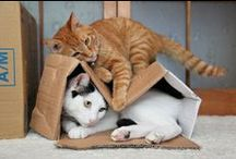 Just cute stuff (aka Critters) / by Sandy Wallgren