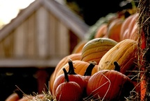Autumn, Autumn Leaves, Fall