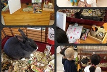 Pet Rabbit Inquiry