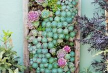 Garden / by Danielle Townsley