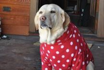 Sewing for Pets / by Sew-Whats-New.com