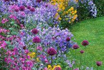 Garden stuff / by Kat Donovan