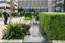 London Gardens / Gardens, squares, and plants in London