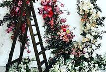 florals // botany