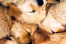 pups //