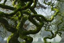 Mossy / by Suzanne Marie