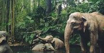 Magnificent animals / This board's previous name was :::magnificent:::nature:::