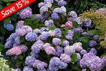 Hydrangea / by Great Garden Plants