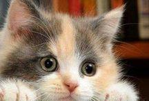 Little Cute Kittens / Little Cute Kittens  #KittensCatsMeowing #KittensCatvideo #KittensCatsFunny #KittensCatCompilation