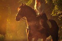 Pferdewissen