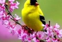 For The Birds / by Reta Wilson