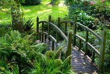 Dream garden/jardin de rêve