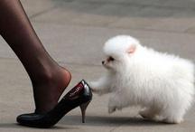 Cute animals.  / by Soledad Calabuig