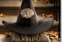 Halloween / by Sherry Dobreski