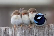 Angry Birds / by Sherry Dobreski