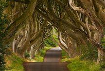 All things Irish / by Marla Affleck Radeke