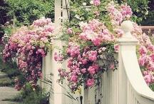 Gardens and greenery