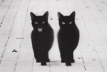 Twins / by Marianna Di Ferdinando
