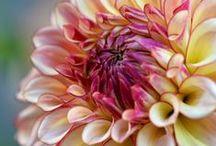 Flowers / by Mariangeles Mandagaran