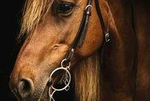 Horses / by Mariangeles Mandagaran