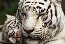 Animal love / Amo y respeto profundamentemente a los animales.Ellos nos ensenan lo que es el verdadero amor. / by Mariangeles Mandagaran