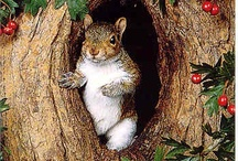 Squirrels / SQUIRRELS SQUIRRELS SQUIRRELS!! Oh how I love them - images on my fav furry little creature sourced from my fav blogs, pinterest peeps, weheartit, flickr and many more great resources! <3 / by Amy Nutkin