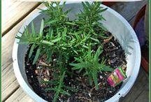 Gardening for Beginners / Gardening Tips and Tricks for Beginners