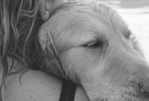 Man's Best Friend / Dogs, puppies, and love love love. / by Gracie Wallace