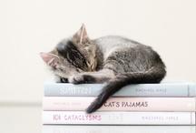 Too Cute / by Sabrina V.