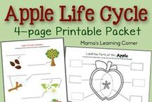 Homeschool Unit Study: Apples / A large selection of apple-themed crafts, activities, worksheets & printables to supplement any apple-themed unit study / by Lauren Hill