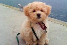 Puppy Love / by Christina Baik
