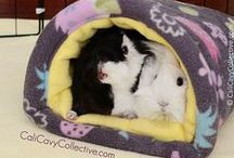 Piggy Palace {guinea pig ideas & care}