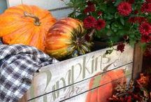 Fall Decor / by Kristy Bishop