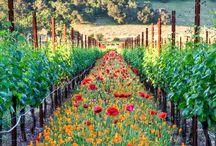 Garden Inspiration / by Crystal Cusimano