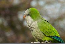 Birds / by Dawn Lange