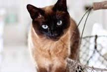 KITTY CAT / by COCOCHIC