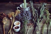Herbalism / by Dawn Lange