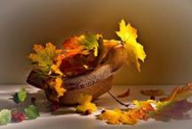 Autumnal / Delicious autumn! My very soul is wedded to it, and if I were a bird I would fly about the Earth seeking successive autumns.  George Eliot / by Linda James
