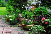 Porches Plants and Patios