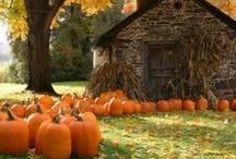 Fall into fall!! / by Ashley 'Sheridan' Clampitt