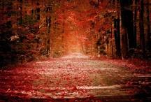 Falling into Harvest / by Rachel Turkal