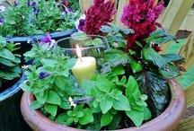 Gardening and outdoor decor / by Ashley 'Sheridan' Clampitt