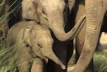 Elephants / by Beth Theia